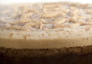Beer-Trivia-yeast